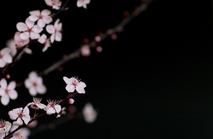 "Image I chose after googling ""Japan Spring"""