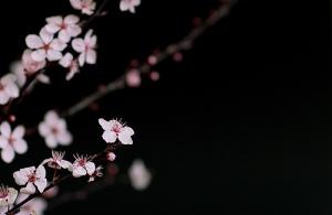 """Image I chose after googling """"Japan Spring"""""""